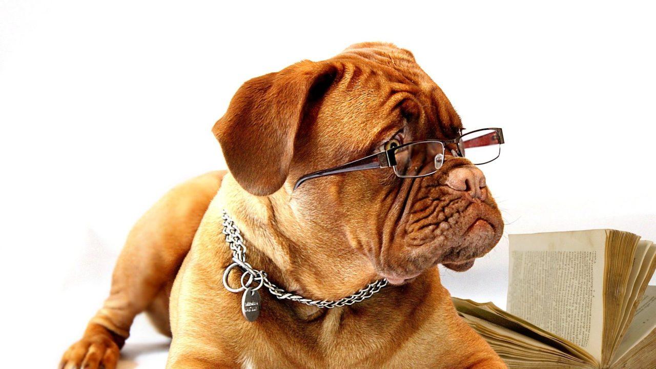 犬とメガネ